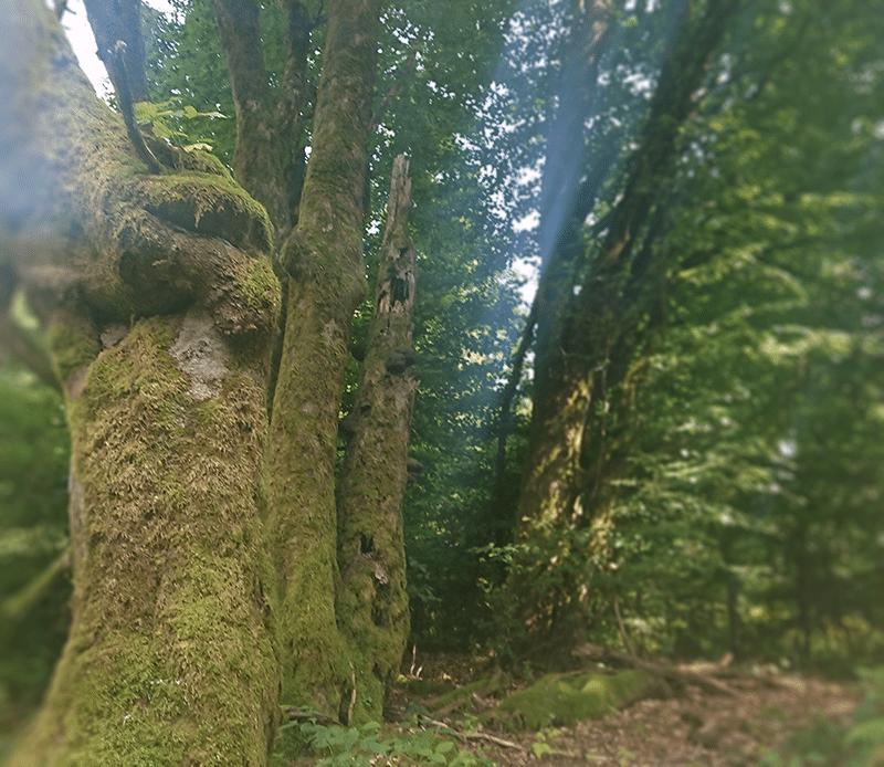 Ein Waldstück in der Röhn