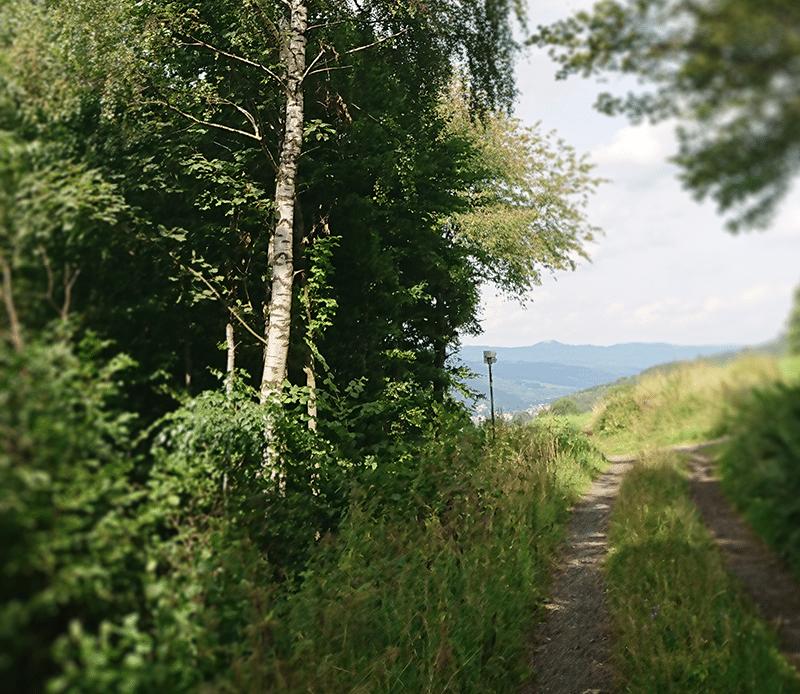 Ein Waldweg in der Röhn der hinausführt.